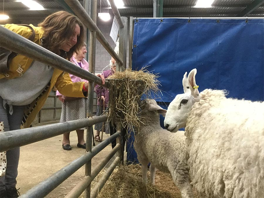 Rachel meeting a Border Leicester Sheep at Woolfest
